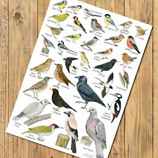 A4 British Garden Birds Identification Chart Wildlife Card Poster Art Print