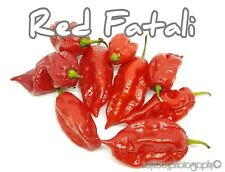 (25+) Red Fatali Pepper Seeds