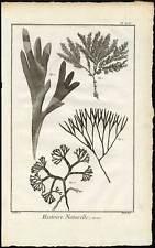 Antique Print-FUCUS-ALGAE-Diderot-1751