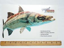 SNOOK FISH DECAL STICKER DON RAY - REVERSE IMAGE ALSO AVAILABLE