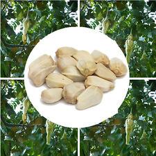 10Pcs Delicious Female Ginseng Eggplant Pepino Seeds Tree Bonsai Fruit Plant New