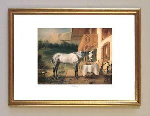 Cosa Rara Die Pferde König Ludwig II. Königshaus Linderhof Ludwig A3 13 Gerahmt
