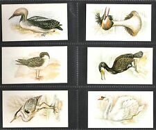 Birds Post-War Cigarette Cards (1945-Now)
