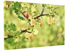 KITCHEN CAFE SHOP FRUIT CANVAS PICTURE PRINT WALL ART CHUNKY FRAME LARGE 1821-2