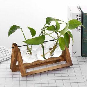 Bonsai Vintage Flower Pot Glass Vase Wooden Frame Hydroponic Plant Vases