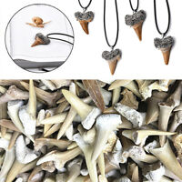 Natural Shark Tooth Fossil Animal Bone Specimen DIY Necklace Crafts Home Decor