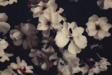 Neoprene Scuba Hazy Floating Flowers Print Dress Fabric Material (Dark Navy)