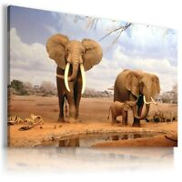 ELEPHANTS Domestic And Wild Animals Canvas Wall Art Picture Large AN124 MATAGA .