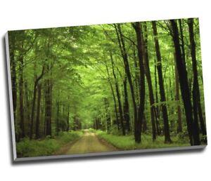 "Green Forest Woodlands Canvas Print Wall Art 30x20"" A1"
