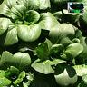 Green Rape 2000seeds Chinese Vegetable Colorful retail package 夏秋播上海苏州青蔬菜原装彩包种子籽