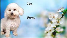 Bichon Frise Dog Self Adhesive Gift Labels design No. 1. by Starprint