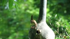 Gourd Birdhouse Bottle Great Heirloom Vegetable By Seed Kingdom 15 Seeds