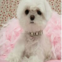 Dog Collar Alloy Diamond Necklace Cats Collars Dog Accessories Dogs Pet Supplies