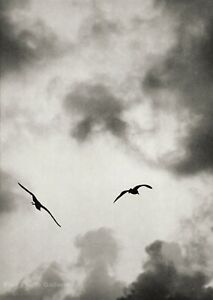 1963 Vintage Seagulls In Flight By JERRY LEBECK Cloud Sky Bird Photo Art 8X10