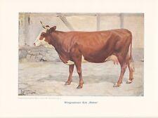 "Wittgensteiner Kuh ""Halma"" Farbdruck 1925 Reprint"
