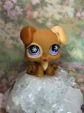 Littlest Pet Shop Authentic # 760 Brown Baby Boxer Puppy Snowflake Eyes
