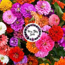 ??NEU Zinnien CALIFORNIA GIGANT Mischung Bunte 100 Samen Bauerngarten Blumensame