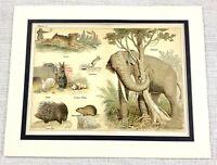 1879 Antico Stampa Elefante Porcupine Gerbillo Conigli Criceto Zoology 19th C