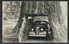 CA Leggett RPPC 40's CAR DRIVE THU CHANDELIER TREE at UNDERWOOD PARK on HWY 101