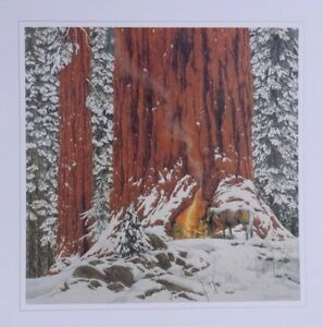 """Bev Doolittle """"CHRISTMAS DAY GIVE OR TAKE A WEEK''Camouflage Art-Horses WSS-MINT"""