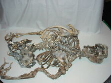Alien Skeleton from Invasion TV Series Prop Skeleton (Shaun Cassidy)