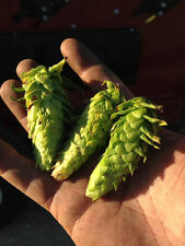 Hops rhizomes for sale-Sorachi Ace, Cascade, Magnum, Nugget, Willamette, Chinook