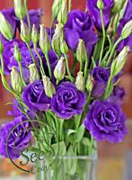 Seeds Lisianthus Eustoma Grandiflorum Blue Flowers Garden Home Perennial 100 Pcs