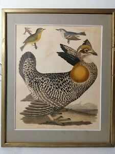 "ORIGINAL Hand Colored Engraving  ""American Ornithology"" Alexander Wilson #27"