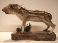 Taxidermy Mount Wild Baby Boar Pig Hunting Swine Decor Hog Real Head Nice Art