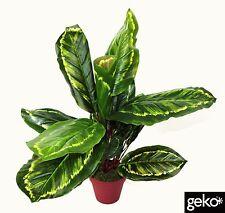 Indoor Outdoor Realistic Artificial Medium 50cm Calathea Veitchiane Plant Tree