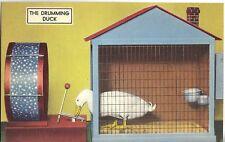 Vintage Post Card - THE DRUMMING DUCK - Hot Springs AR - Tichnor animal training