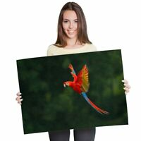 A1 - Macaw Bird Tropical Jungle Poster 60X90cm180gsm Print #2770