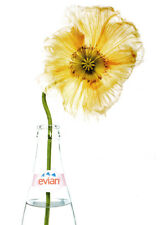 Evian water 2 page print ad 2004 Large Yellow Flower