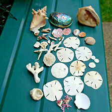 More details for job lot  of sea shells & coral conch, abalone / paua, sand dollars, helmet