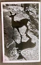 RPPC OREGON OR Hello Deer greetings from Oregon shadow  sawyer 16821 C1930s