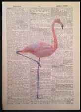 Vintage Pink Flamingo Original Dictionary Print Page Wall Art Picture Animal