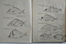 Fish-Fishes-Ichthyology-H erpetology-Cornell Univ-Science-Manuscript-D rawings-&c
