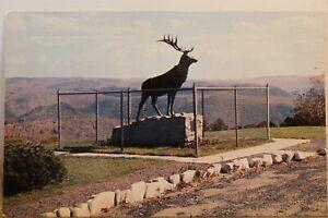 Massachusetts MA Mohawk Trail Whitcomb Summit Trail Elk Postcard Old Vintage PC