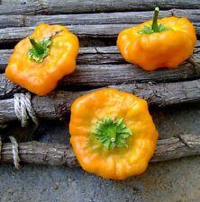Pepper Seeds Jamaican Yellow 200 Scotch Bonnet Pepper Seeds HOT CHILLI