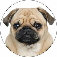 CUTE PUG, DOG   Vinyl Wall Car Van decal Sticker