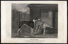 Antique Print-GREYHOUND-DOG-CHARLES WYATT-Scott-Marshall-1815