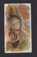 1890 Allen & Ginter N21 Quadrupeds Badger