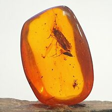 CADDISFLY Insect + more in Dominican Amber Fossil *Miocene* FSR346 ✔100%genuine