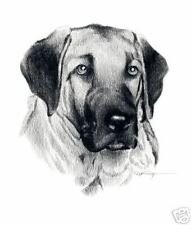 Anatolian Shepherd Pencil Dog Drawing Art Print Signed by Artist Dj Rogers w/Coa