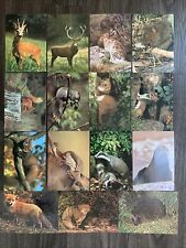 More details for full set of 15 - j arthur dixon collectacard postcards. wild animals of britain