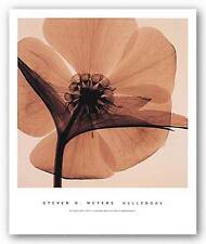 PHOTO FLORAL ART PRINT Hellebore by Steven Meyers 18x18