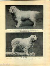 1930 Book Plate Print Clumber Spaniel Oakerland Repeater Sir Peter Norton Madame