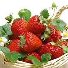 200 Pcs Seasons Balcony Potted Seeds Strawberry fruit Seeds