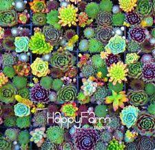 New listing 100 Pieces/Bag Best-Selling!Succulent Cactus Seeds Lotus Lithops Bonsai Plants