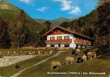 Bt13391 Aschaueralm bei mittenwald sheep mouton Germany